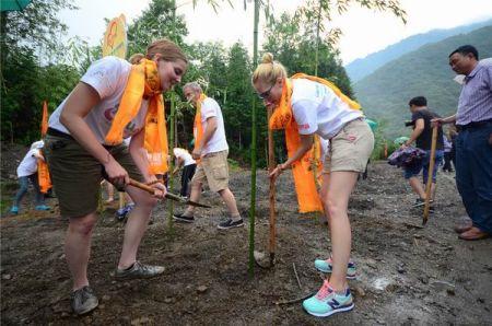 """熊猫粉丝们在熊猫基地为大熊猫种植""""爱心竹林"""""""
